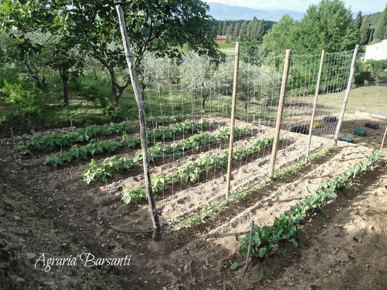 Giugno nell 39 orto agraria barsanti for Piantare pomodori